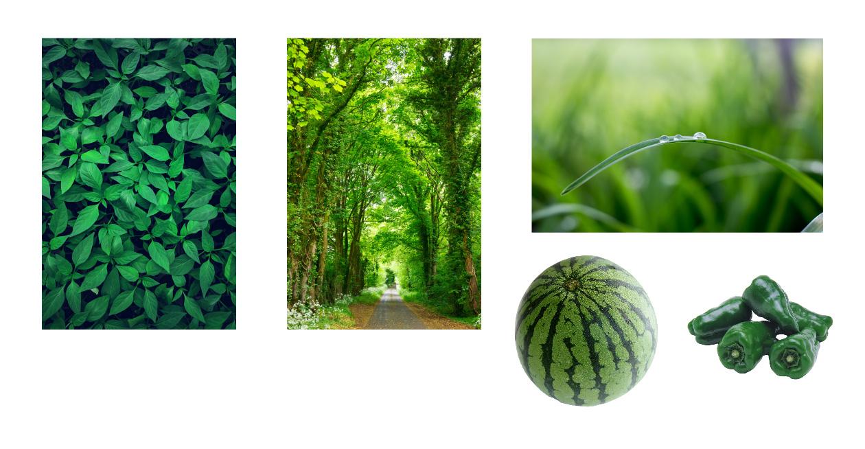 緑色から連想するもの
